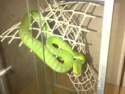 exotic reptiles for sale